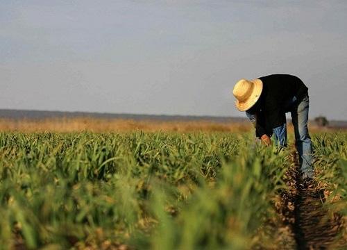 Fedeagro: Escasez es por drástica caída de producción de alimentos