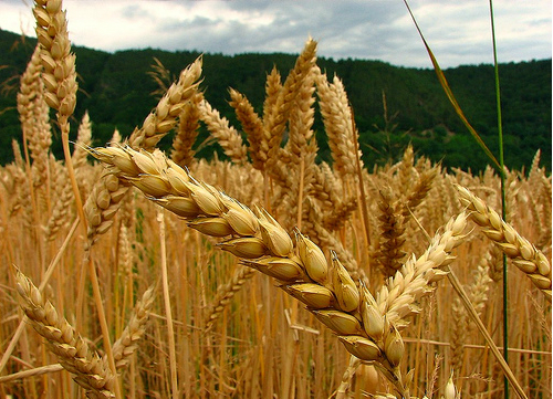 Falta de insumos afecta 75% de los sectores de alimentos