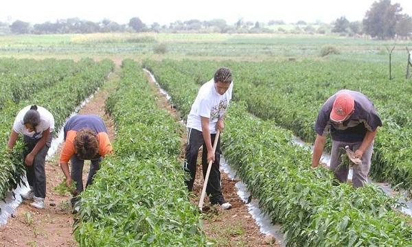 Fedeagro espera respuesta del Gobierno sobre plan para enfrentar crisis alimentaria