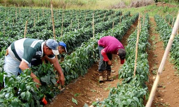 Fedeagro: Se necesita producción no mano de obra