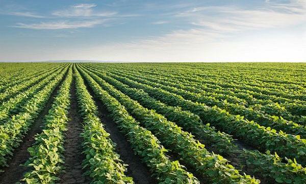 Fedeagro: 98% de la soya en Venezuela es importada