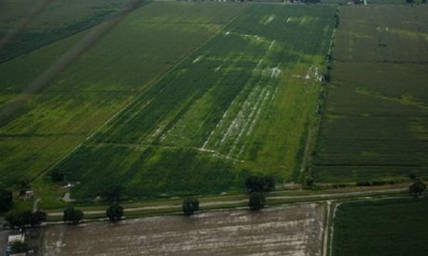 Producción agrícola apenas cubre un tercio del consumo nacional