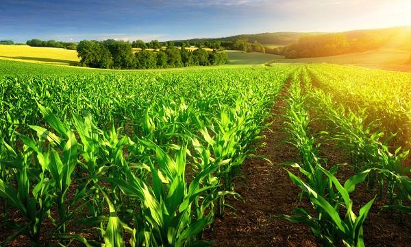 Piden para mecanización agrícola $ 3 mil millones
