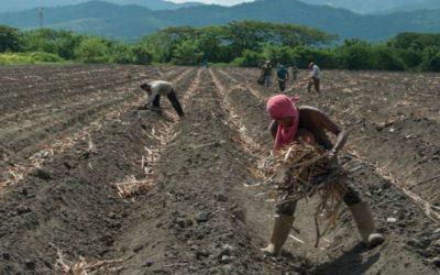 Asoportuguesa: se requieren políticas del Estado que motiven a productores agrícolas