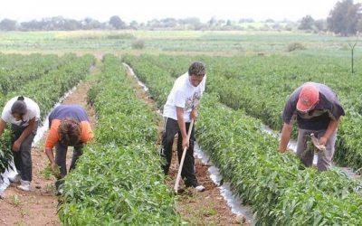 Fedeagro: Sector tiene 0% de fertilizantes para cosecha 2017