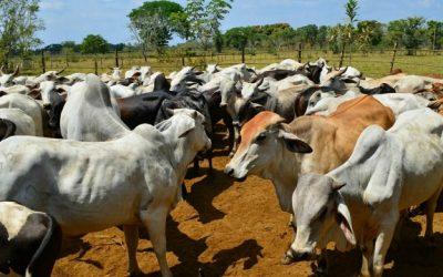 Fedenaga manfiestó preocupación por decisión del TSJ