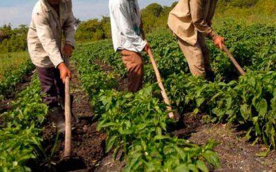 Agricultores Chilenos preocupados por situación del sector Agroproductivo Venezolano