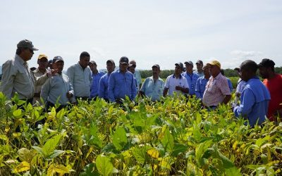 Técnicos de ANCA visitaron cultivo de soya en Lara