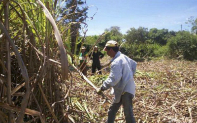 Sector azucarero se reúne para recuperar producción