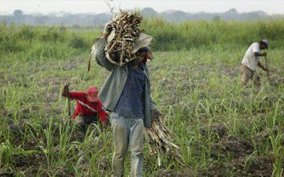Fedeagro espera publicación de nuevos precios del arroz y el maíz