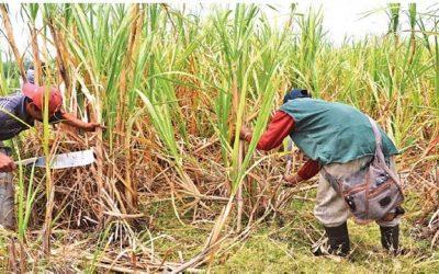 Sector azucarero nacional se encuentra a punto de colapsar la zafra 2017-2018