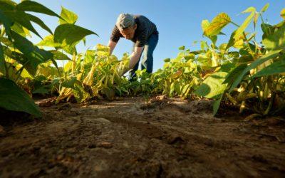Producción agrícola e industrial se mantiene en Sucre y Guárico pese a las adversidades