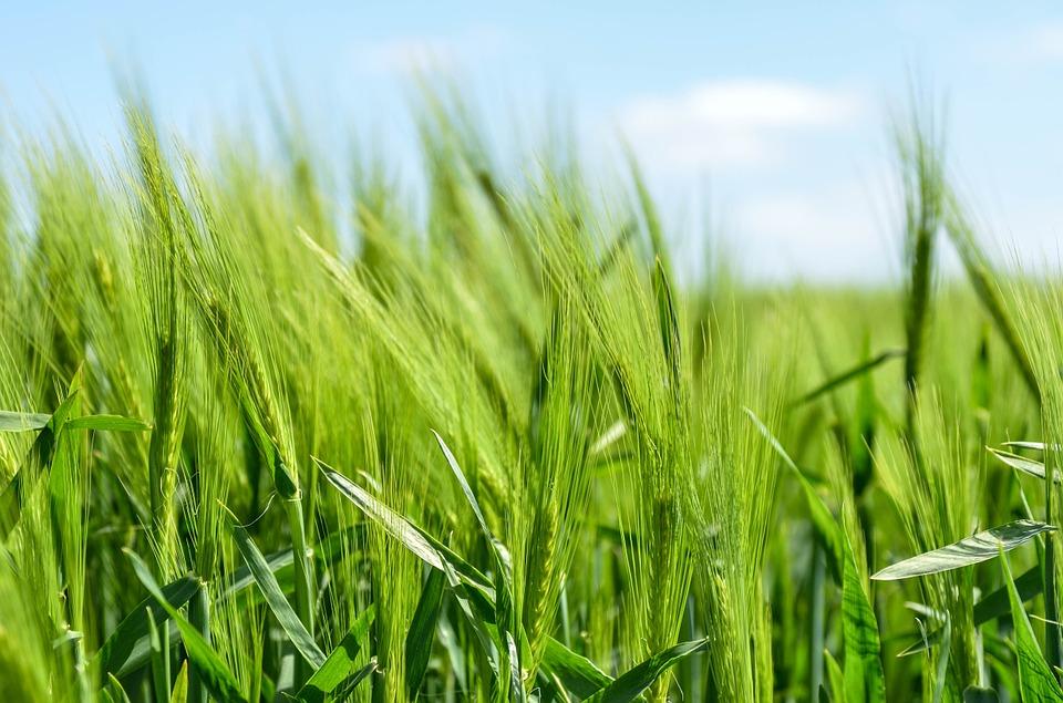 Las sanciones de Estados Unidos no afectan al sector agrícola, según Fedeagro
