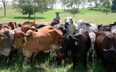 Advierten que contrabando de extracción golpea al sector ganadero
