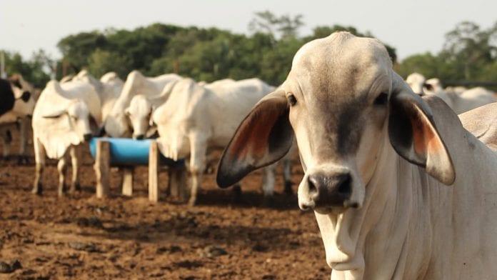 Fedenaga: Sector ganadero está en situación de emergencia