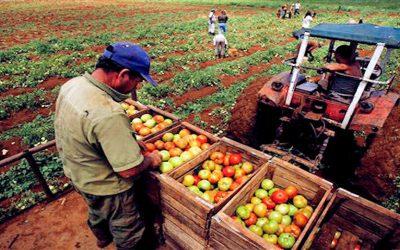 Empresarios y productores escépticos ante ley de Producción Agroalimentaria Urbana