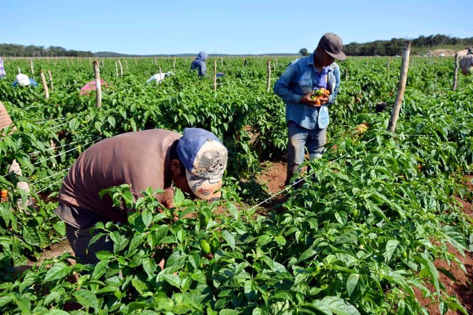Producción agrícola en Venezuela