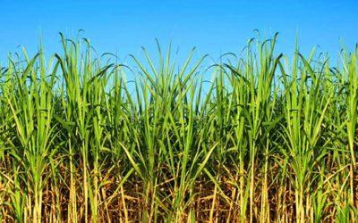 Fesoca: Aumentamos un 20% la producción en la zafra 2020-2021
